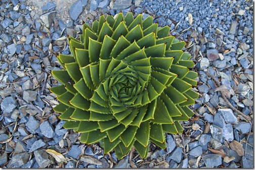 Aloe spirals on_1280_for_Web