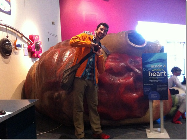 blue whale's heart with Aaron